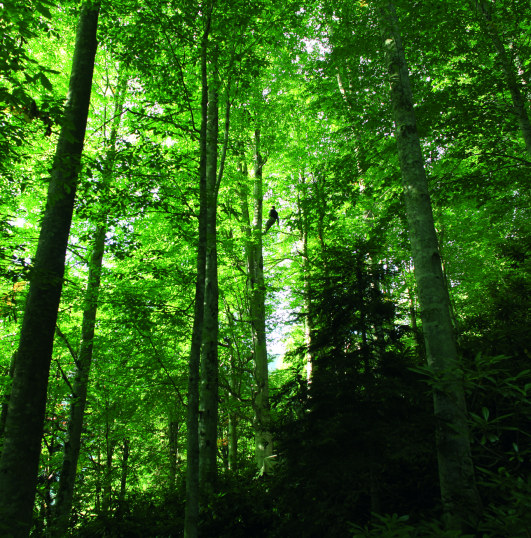 BAL_Ya_im-Baum
